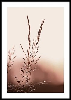 Beach Posters, Love Posters, Wall Posters, Forest Poster, Auto Poster, Ciel Rose, Gold Poster, Buy Posters Online, Dahlia