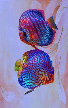 Estos son hermosos peces de agua dulce ~ peces Discus: