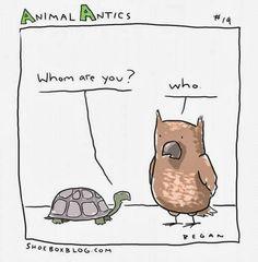 animal-antics19-491x500.jpg (491×500)