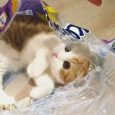 Packaged Cat
