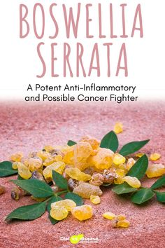 Boswellia is an herbal extract and essential oil, also known as frankincense. It's has been used for centuries in incense, perfumes and traditional Asian, African and Middle Eastern medicine. It's now touted for its anti-inflammatory properties and potential ability to even fight cancer. This article digs into the science behind boswellia to see if it lives up to the hype. #health #nutritionist #diet