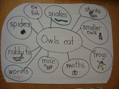 Teaching with graphic organizers: For the Owl Pellets