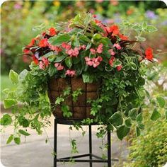 Great website for Planting mixed pots! Shows you different options for sun and shade, all the names of the plants and how to plant them in the pot