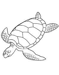 sea turtle print out - Google Search