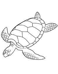 sea turtle print out - Google Search