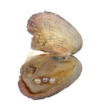 Huître souhait de d'eau douce perles perles Coquille de Moule Oyster Perles Emballage Sous Vide À L'intérieur Perle Surprise Mystérieuse(China)