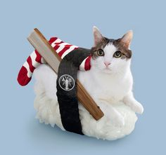 cat sushi roll - Google Search