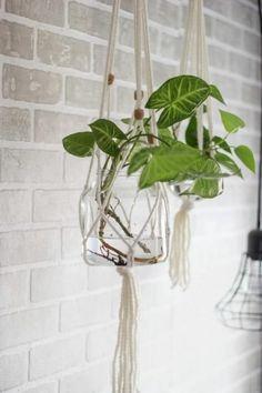 DIY Macrame Hanging Plant Holder (Magnolia Homes)