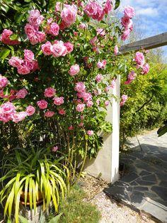 Bij thuiskomst weer genieten van m'n eigen tuin..! Helaas kan ik dit jaar mijn rozen op deze dag met niemand delen. Nou ja, hierbij dan toch een beetje...;-) | foto:©VLVI