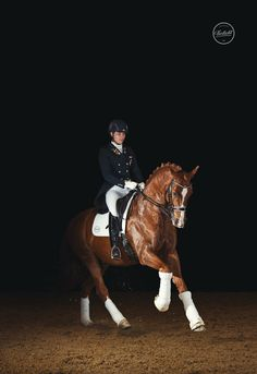 """Horse and dressage rider by horse photographer """"Tierlicht"""" Horse Photography, Dressage, More Pictures, Riding Helmets, Horses, Animals, Fashion, Pictures, Animales"""