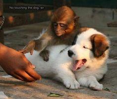No Touching The Dog Sir