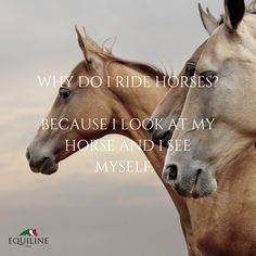 Why do you ride horses? #equestrian #horse #quotes
