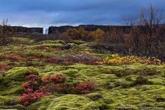 North Of Westeros: Thingvellir, Iceland