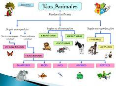 Clasificacion animales
