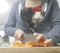Post with 22 votes and 1476 views. Shared by When you're a loving parent but need to get shit done Cute Cats And Dogs, Little Kittens, Cool Cats, Kittens Cutest, Cats And Kittens, Cute Wild Animals, Funny Animals, Funny Cat Videos, Funny Cats