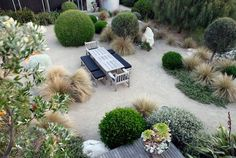 contrast of textures & colours in this coastal garden with low maintenance plants by Fiona Brockhoff Design