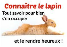 Pour bien s'occuper de son lapin et le rendre heureux, il est indispensable de connaître sa personnalité et ses besoins. Je vous propose donc une petite vidéo qui explique qui est vraiment le…