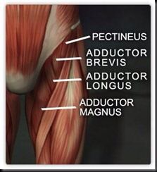 Do your knees draw together during heavy squats? Learn how to strengthen your adductors! http://melriccardi.blogspot.com/2010/11/are-weak-adductor-muscles-affecting.html?m=1