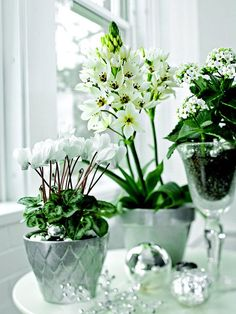 Shimmery silver ornaments are the perfect accent to a display of white potted flowers, such as these cyclamen, Star-of-Bethlehem, and kalanchoe.