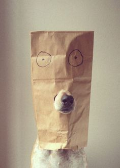 わたしも犬になりたい