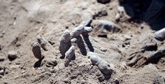 Week of Apr 2015 A hand is seen as Iraqi forensic teams recovered dead bodies from a mass grave in the presidential compound of former Iraqi president Saddam Hussein in Tikrit on Sunday. Iraqi President, Syria News, Iraqi Army, Horror, Human Rights Watch, Russia News, Iraq War, Forensics, Photos Of The Week