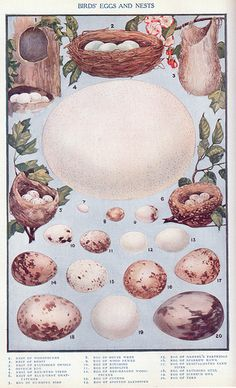 Birds' Eggs and Nests. Colorful illustration from public domain book published in 1917.