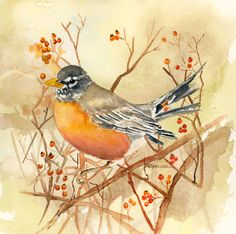 Kathleen Spellman   WATERCOLOR Robin ...I love watching for the Robins in the Spring :)