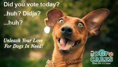 "Only a few more days to vote in the ""Paws For A Cause"" contest. Make sure you vote daily at http://dgpforpets.com/dgpcares/ to help ELDER PAWS RESCUE win!"