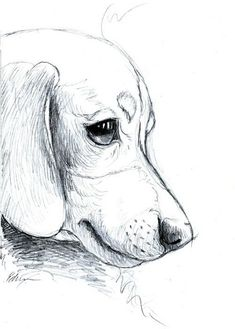 Dachshund lovers - doxie puppy sketch' case/skin for samsung Animal Sketches, Animal Drawings, Drawing Sketches, Pencil Drawings, Drawing Ideas, Drawing Drawing, Sketch Ideas, Sketch Art, Sketches Of Dogs