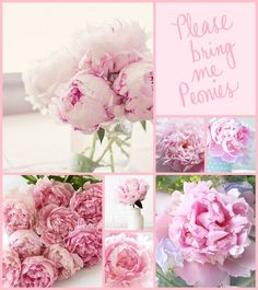 moodboard peonies by AT