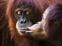 San Valentino: Amori selvaggi