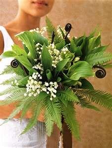 ferns, fiddleheads