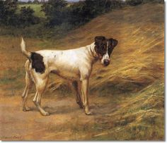 Maud Earl - Smooth Fox Terrier 1900 Smooth Fox Terriers, Rat Terriers, Terrier Dogs, Jack Russell Dogs, Jack Russell Terrier, Small Dog Breeds, Small Breed, Wire Fox Terrier, The Fox And The Hound