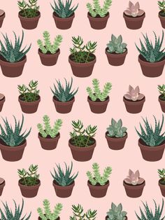 Hand-drawn succulent card collection from Pattern Paper Co.