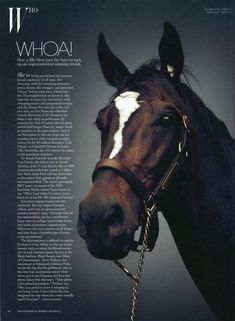 Zenyatta, proclaimed the great female racehorse of all time. I have this on my wall at work!!! W magazine even recognized what a phenomenon she was