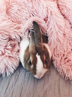 Animals And Pets, Baby Animals, Cute Animals, Cute Buns, Bunny Care, House Rabbit, Honey Bunny, Baby Bunnies, Bunny Rabbit