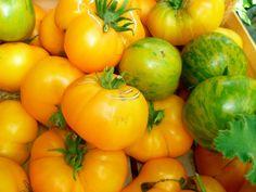 Tomates, jardin des sambucs