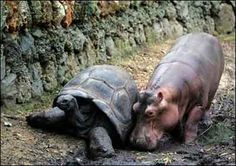 Young Tortoise and Hippo FRIENDS PT2