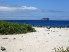 The Invisible Man at the beach (North Seymour Island in the Galapagos).