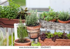 Planting herbs and vegetables on balcony