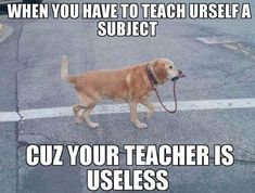 Really Funny Memes, Stupid Funny Memes, Funny Relatable Memes, Haha Funny, Funny Posts, Funny Quotes, Hilarious, College Memes, School Memes
