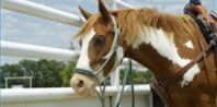 How to Make a Braided Horse Rein | eHow.com