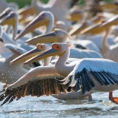 Danube Delta Biosphere Reserve