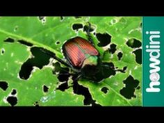 [Gardening] DIY Manage Garden Pests Organically - Curious Cultivator
