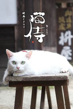 Neko Samurai movie poster