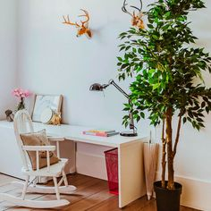 Home Decor Themes Ficus Tree Care Tips: The Plant that every family should have it in their home. - Little Piece Of Me.Home Decor Themes Ficus Tree Care Tips: The Plant that every family should have it in their home. - Little Piece Of Me Retro Home Decor, Home Decor Kitchen, Cheap Home Decor, Best Indoor Trees, Best Indoor Plants, Ficus Tree Care, Coffee Table Book Design, Dyi, Cosy Home
