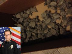 Sarasota Police officer helps saves nearly 100 sea turtle hatchlings