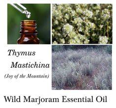 """Marjoram Essential Oil, Wild Marjoram Essential Oil - Thymus mastichina – 100% Pure Authentic Wild Marjoram EO-- """"Joy of the Mountain"""""""