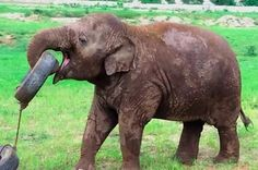 This Baby Elephant Playing With A Tyre Will Make Your Monday Better