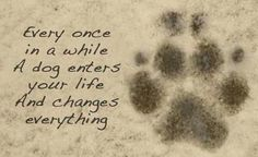 """""""every once and a while a dog enters your life and changes everything."""" #animal #dog #dogs #animals #quote #quotes"""